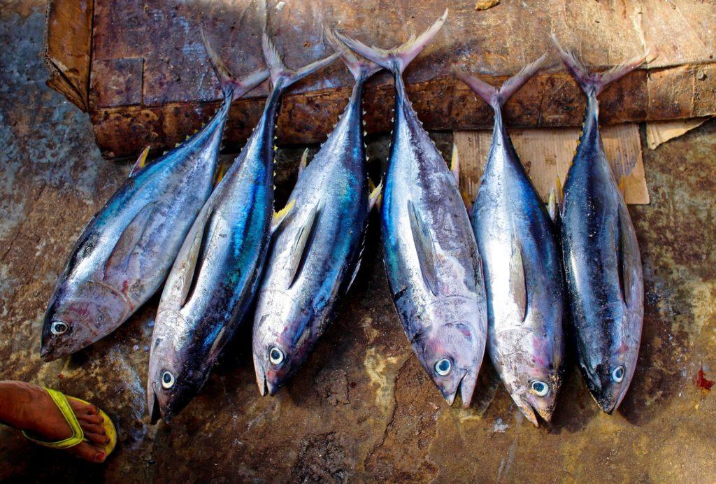 Jakie ryby jeść w ciąży? Rtęć w rybach.